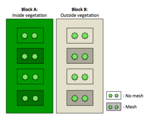 Fig. 1: Split blocks were designed with subplots in different areas. Subplots were planted with the same number of seedlings, but had coconut mesh inserted to test if growth was better facilitated.