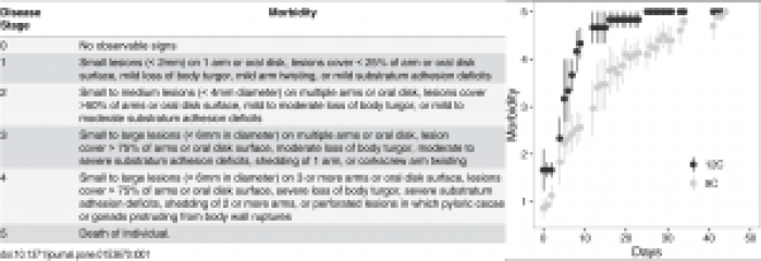 Fig. 3: A description of the symptoms denoting each 'morbidity level' and a plot of the average morbidity level of the sea stars in each tank.