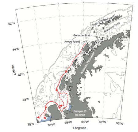 Figure 2. The West Antarctic Peninsula (WAP) and schematic path of the Antarctic Peninsula Coastal Current, which tends to strengthen in the summer when a shallow layer of relatively fresh water exists in the coastal surface waters. (Figure 14 from Moffat 2008)