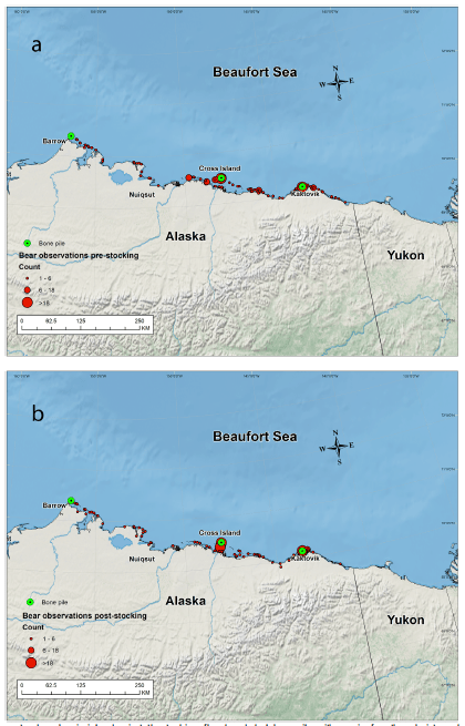 Fig. 2. Map of Study area. and spatial distribution of the surveys conducted in 2010-2013 a) before stocking of bowhead whale bone remains from subsistence-harvest and b) after stocking.