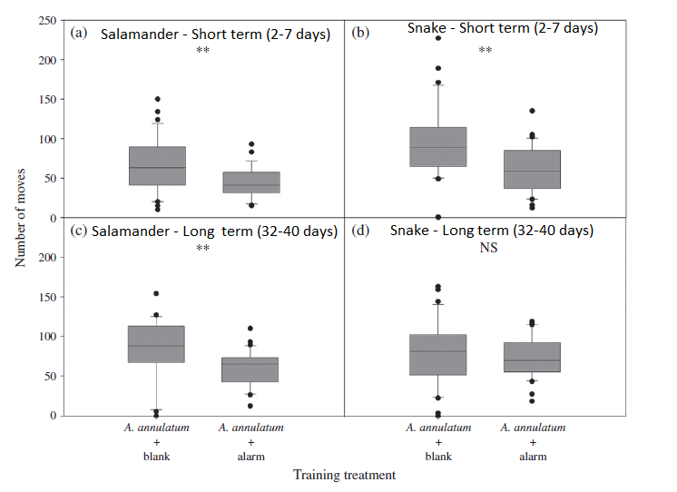 "Figure 2 – Results from the experiment: The figure shows the number of movements observed by each group of fish. ""A. annalatum + blank"" is the control group that was not trained to recognize salamanders as a predator. ""A. annalatum + alarm"" is the treatment group that was trained to recognize salamanders as a predator. Neither group was trained to recognize snakes as a predator. Threatened fish are known to move less frequently than fish that feel relatively safe."
