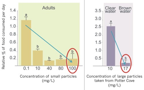 Figure 4 – Feeding efficiency vs concentration of sediment particles in the water. As higher concentrations of particles were added to the water, krill were less able to feel effectively (blue arrows). The yellow bars show an experiment conducted with small particles added to tanks; the purple bars show an experiment with large particles added. It required a much lower concentration of large particles (17 mg/L) to achieve the same effect that a higher concentration of small particles (100 mg/L) had on krill feeding efficiency (red circles). (Annotated version of Figure 3a and 3c in the paper.)