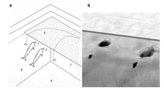 Fig. 5: This figure shows the pool set up (left, A) with numbers indicating where sound receivers sit. Dolphins remain relatively stationary when approaching the walkway (right, B) making it easy to detect which dolphin is making a certain sound.