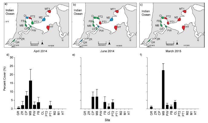 Fig. 2: Abundance and distribution of D. perlucidum in the estuary. a-c show the sites in April, June, and March. Red indicates no D. perlucidum present, blue indicates D. perlucidum on seagrass and artificial substrates, and green indicates D. perlucidum growth only on artificial substrates. d-f show the percent cover (plus standard error) of D. perlucidum on seagrass blades at each site during those months. Source: Simpson et al., 2016.