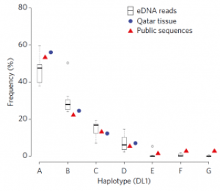 """Fig 2: The eDNA (shown in white boxes) samples from this study found the same genetic diversity (called """"haplotypes"""") that were found from tissue samples (""""Qatar tissue"""", blue circles) and found a larger range of diversity (i.e. more haplotypes) than were found from the tissue samples. The red triangles show the genetic diversity recorded in databases from other studies, showing that the diversity found with the eDNA sequences makes sense based on our knowledge of other whale shark populations."""