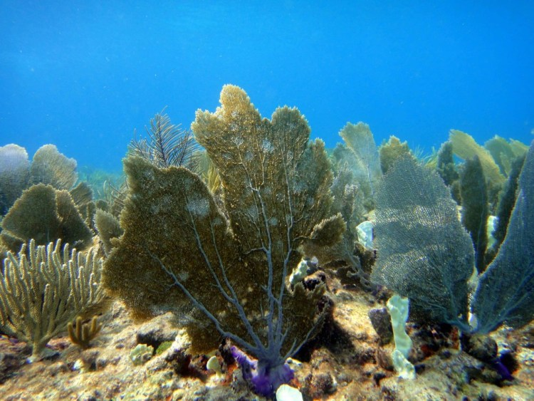 Soft coral dominated reef. Author: Matt Kieffer. Source: Flickr (https://www.flickr.com/photos/mattkieffer/15439205306)