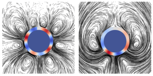 Eating vs swimming. The researchers modeled the flow field around an imaginary circular larva. Cilia along red bands are all moving in one direction and cilia along blue bands are moving in the opposite direction. The more patches of opposing cilia, the more vortices that are formed around the larva (Figure 4e in the paper).