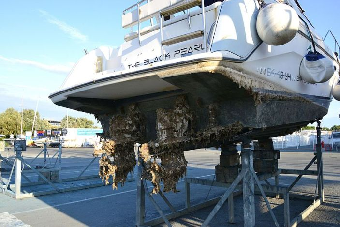 A boat pulled out f the water and standing on land exposing the propellers and hull which are covered in various fouling organisms.