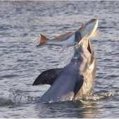 Photo of What Do Dolphins Eat