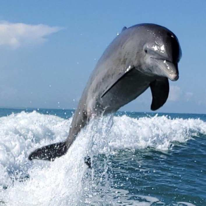 Help Protect The Ocean | Florida Dolphin Jumping behind a boat.