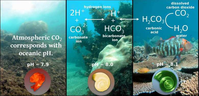 Carbon Dioxide in The Ocean