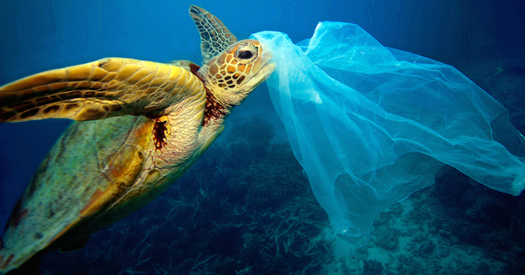 Solutions for Plastic Pollution in the Land of 10,000 Lakes