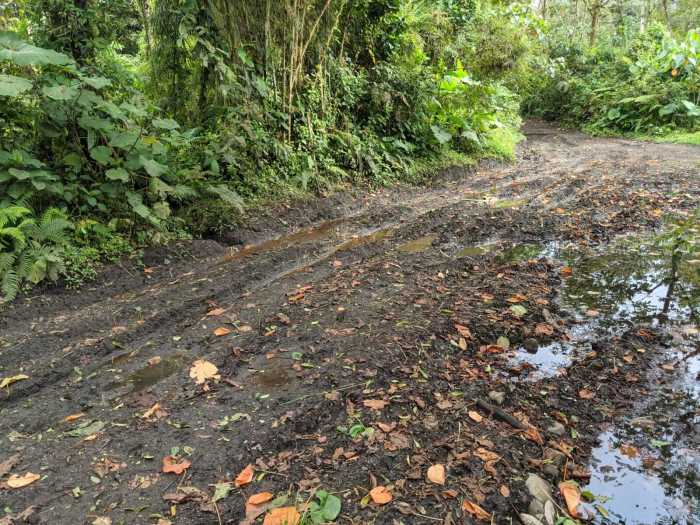 muddy street in the Cloud forest