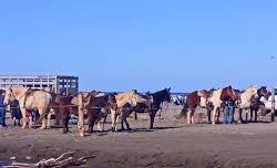 Horse Rental