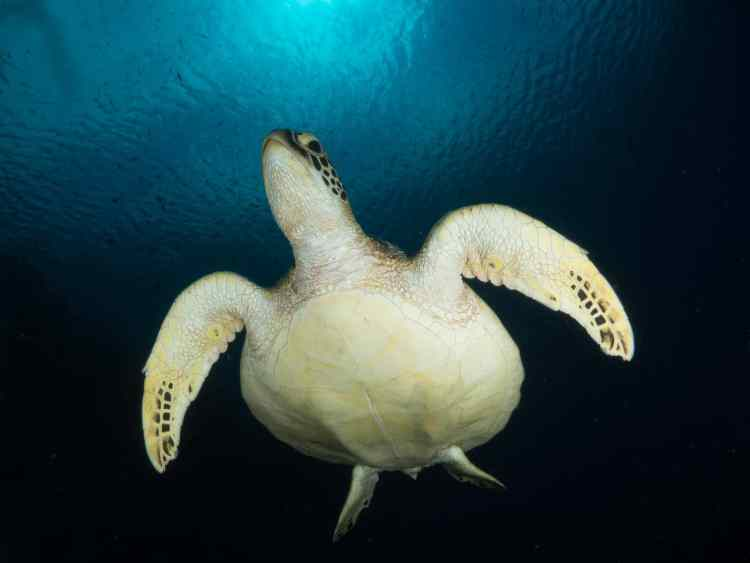 wide-angle photography of a turtle