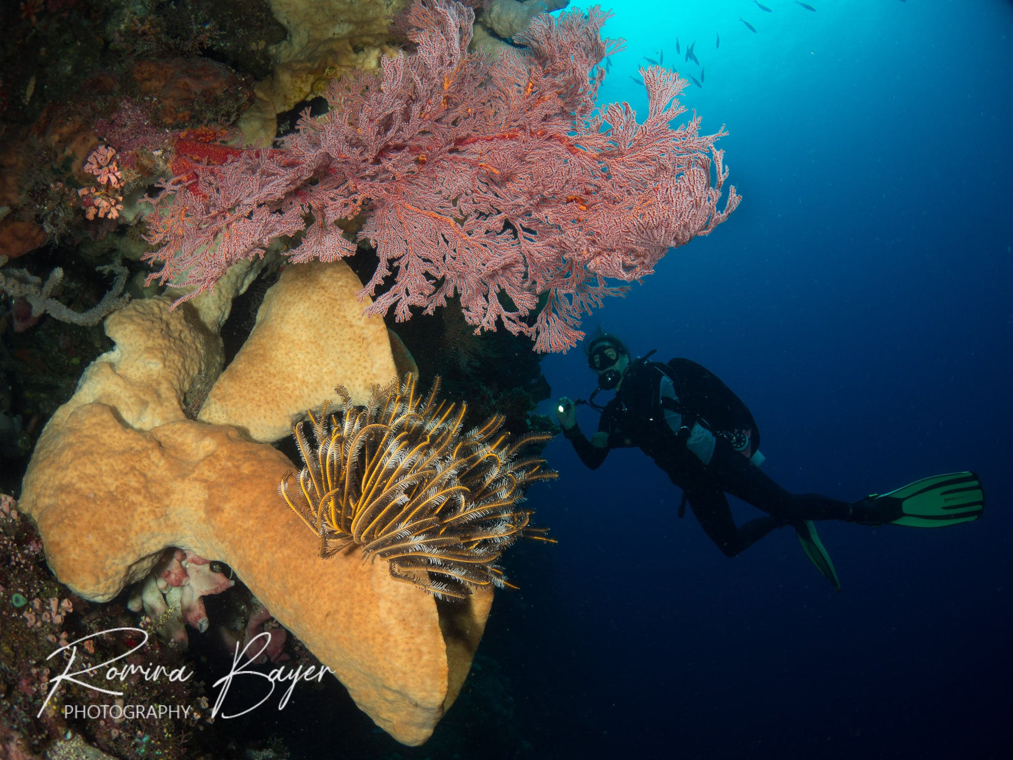 Diver and colorful coral in Bunaken Marine Park, Indonesia