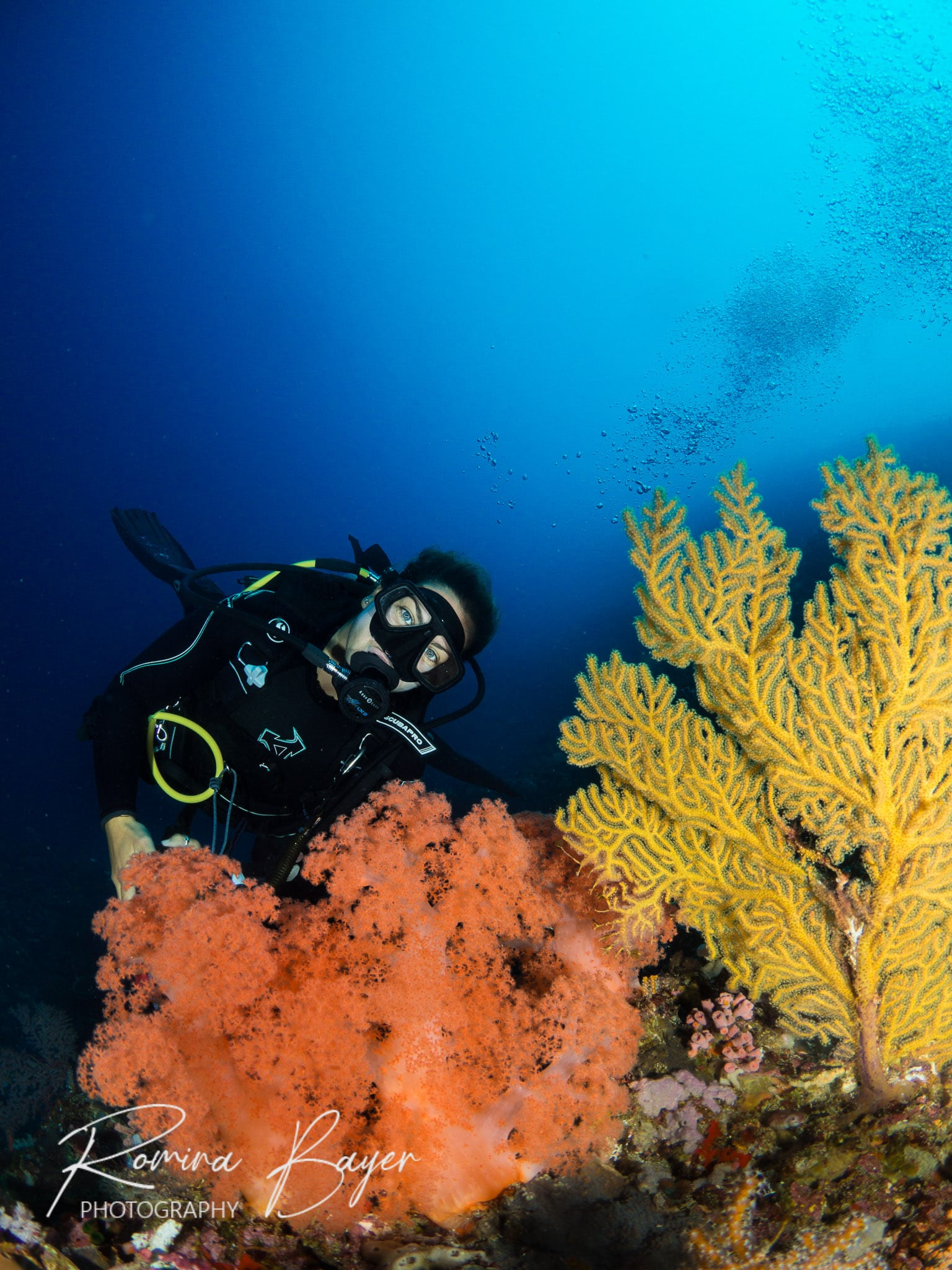 Diver with colorful soft coral