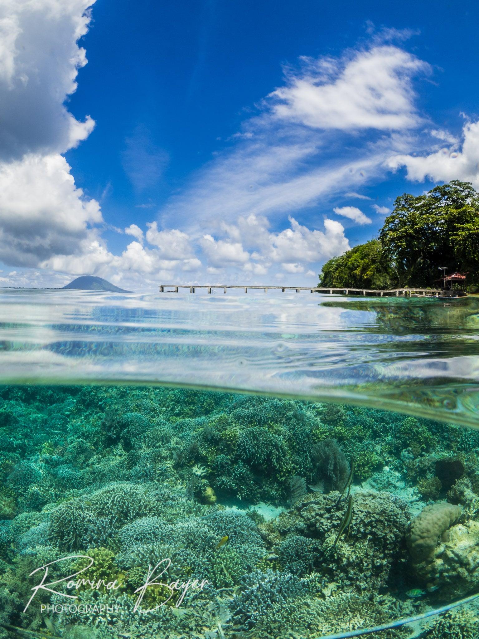 Split shot of a coral reef in Siladen