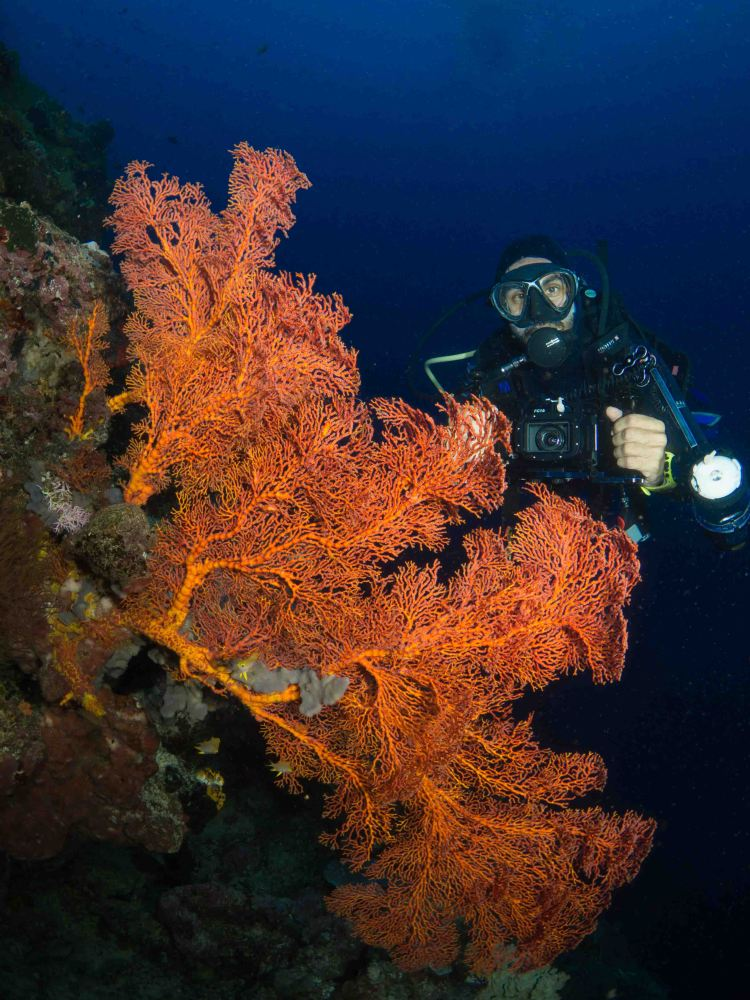Being a responsible underwater photographer