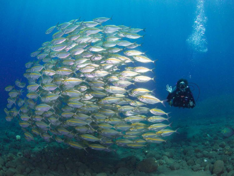 Best underwater settings for the Olympus TG6 are set manually