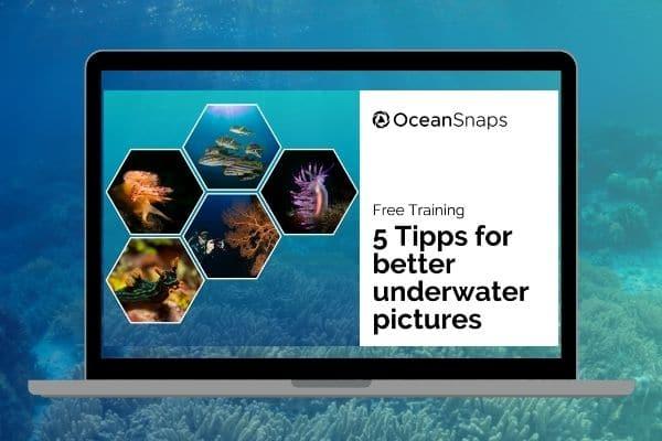 Underwater Photography Webinar 5 tips