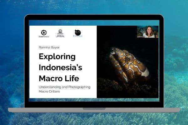 Underwater Photography Webinar Exploring Indonesia's Macro Life