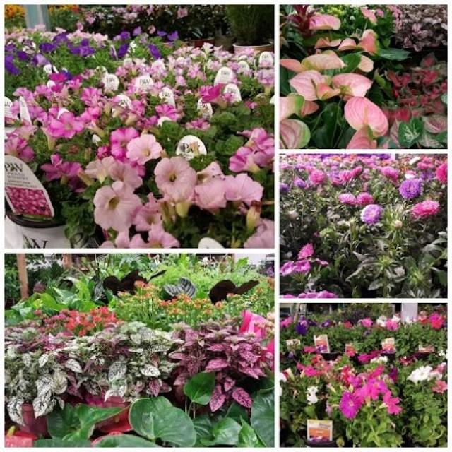 flowers in a nursery OC Goodwill (2)
