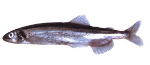 karahutosishamo1