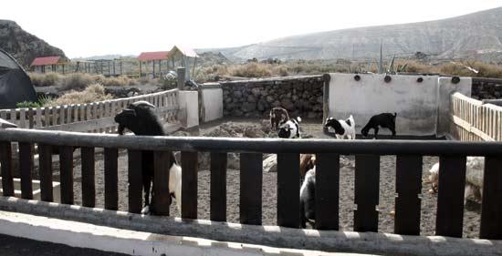 Goats' Corral of Las Pardelas Natural Park , Órzola, Lanzarote