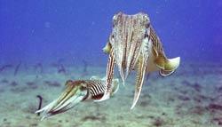 Marine species underwater in Lanzarote