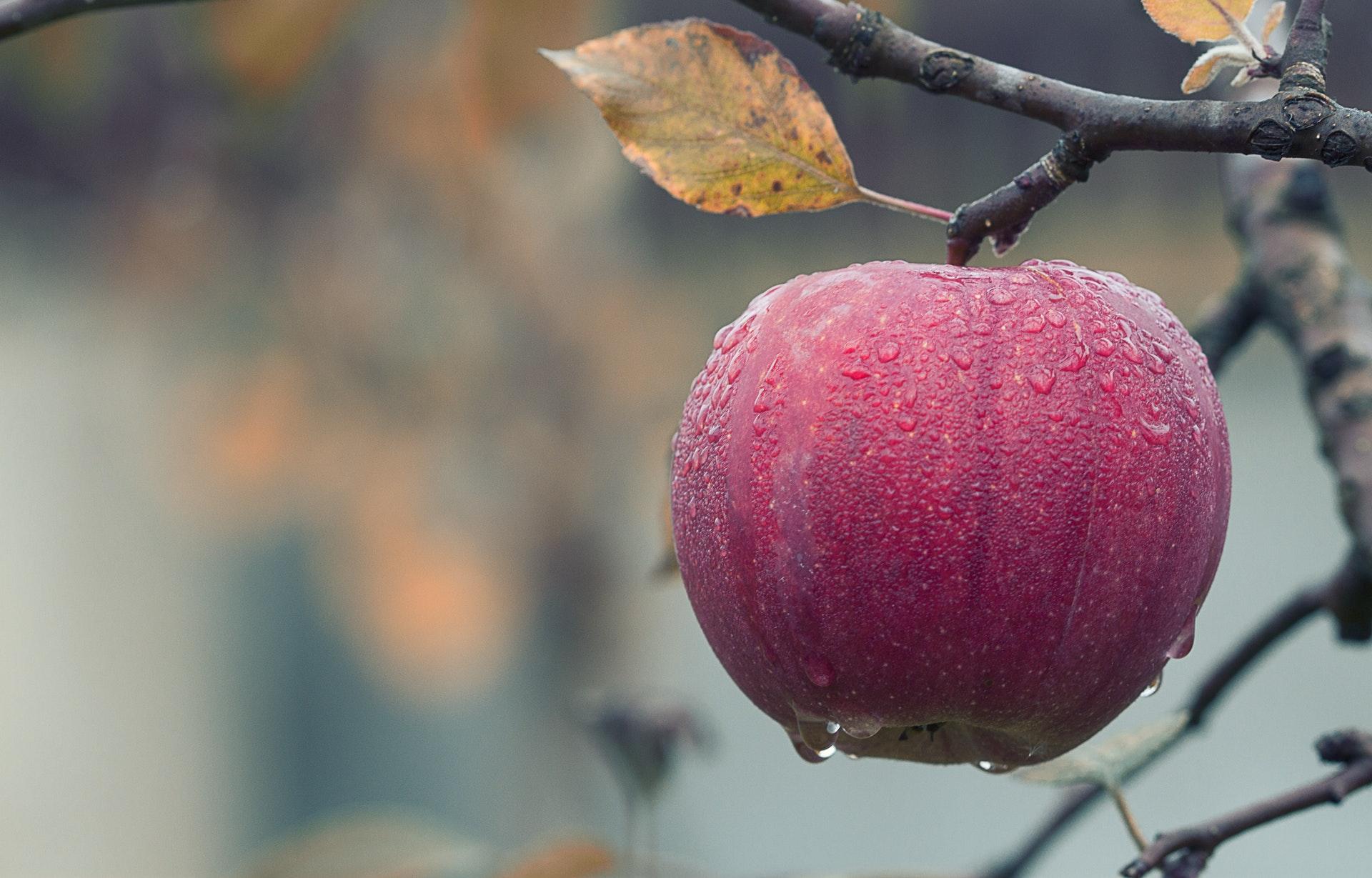 Rondando a macieira