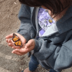 Mile Square Park Annual Monarch Butterfly Day