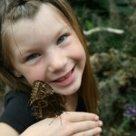 San Diego Butterfly Jungle Returns
