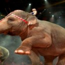 Ringling Bros. and Barnum & Bailey Circus (Giveaway)