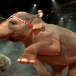 Win Tickets to Ringling Bros. and Barnum & Bailey Circus