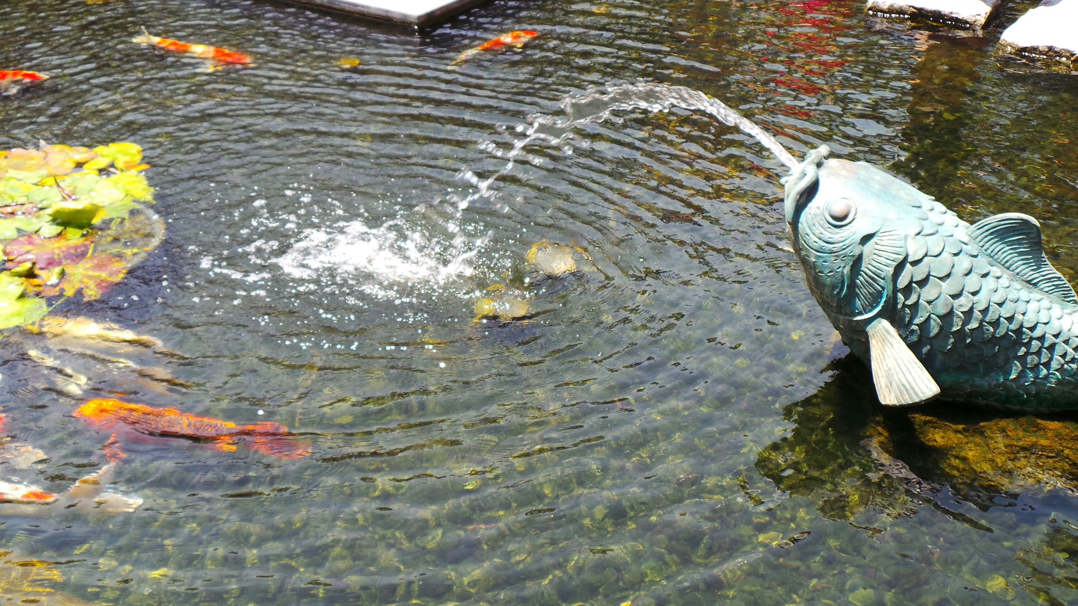 Guide to the fashion island koi ponds in newport beach for Koi pond in house