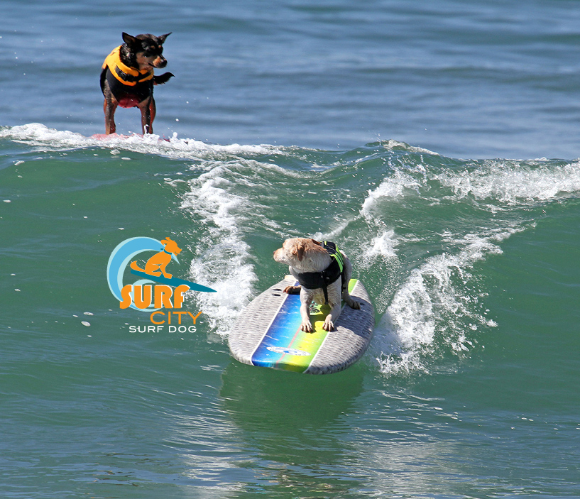 Surf City Surf Dog surf contest