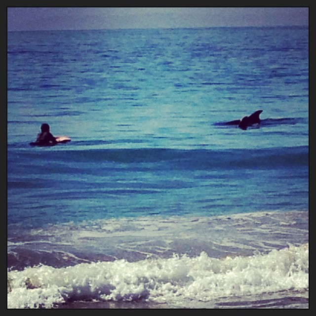 Swimming with the dolphins in Laguna Beach
