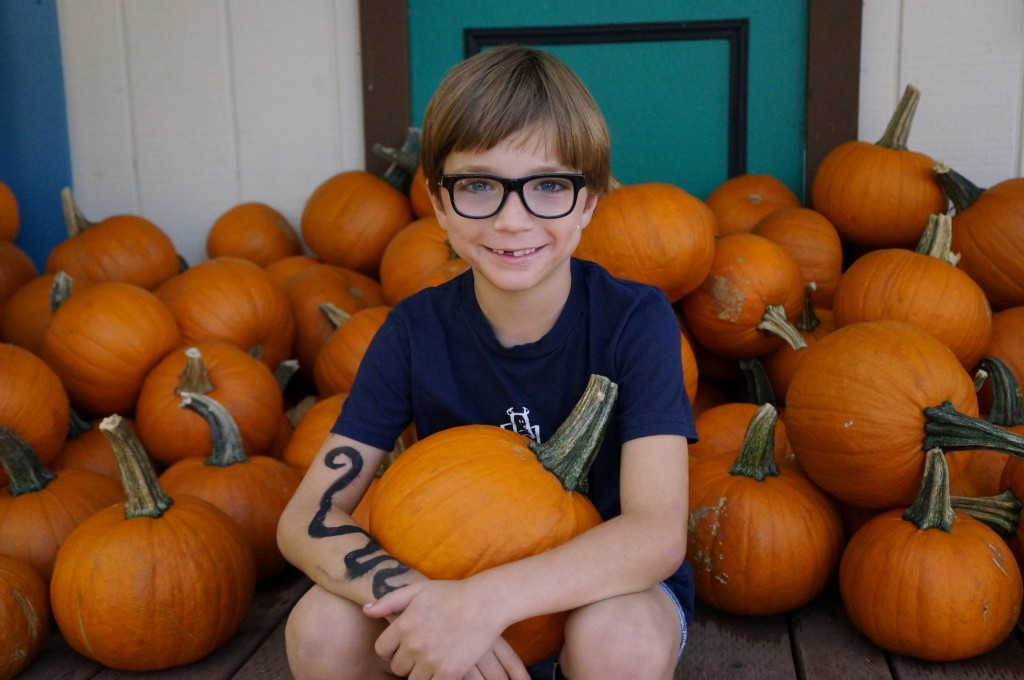 picking out the perfect pumpkin