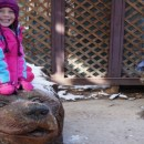 Big Bear Zoo