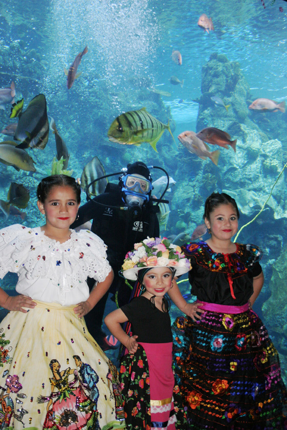 Aquarium-of-the-pacific-Childrens-Day-Festival-1
