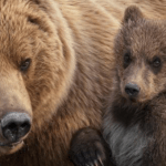 Journey into the Wilderness with Disneynature Bears