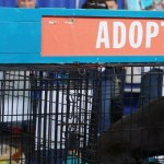 Animal Antics at America's Family Pet Expo
