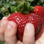 The Berry Best Strawberry Festival in Southern California Fueled by Verizon FiOS SoCal