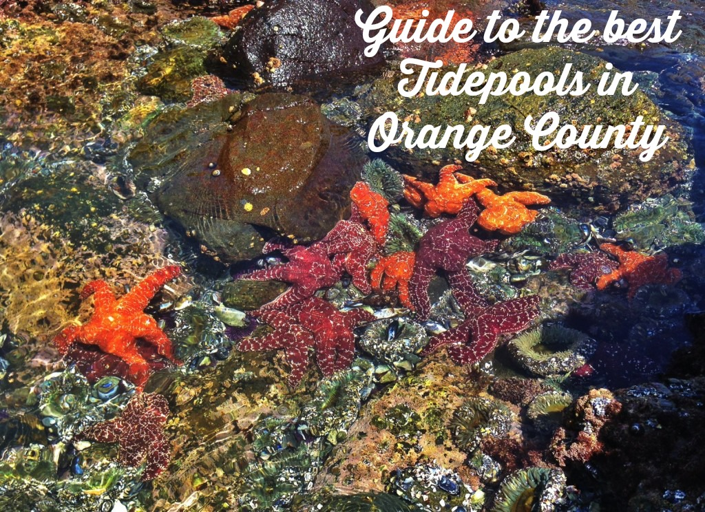 guide to the best tidepools in orange county.jpg