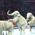 Legendary Family Day at the Circus