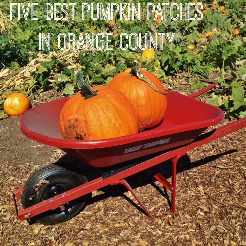 Best Orange County pumpkin Patches
