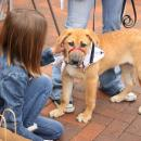 Simple Rules For Introducing Children To Dogs