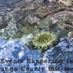 Weekly Events in Orange County: January 5 – 11, 2015