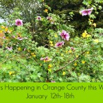 Weekly Events in Orange County: January 12 – 18, 2015